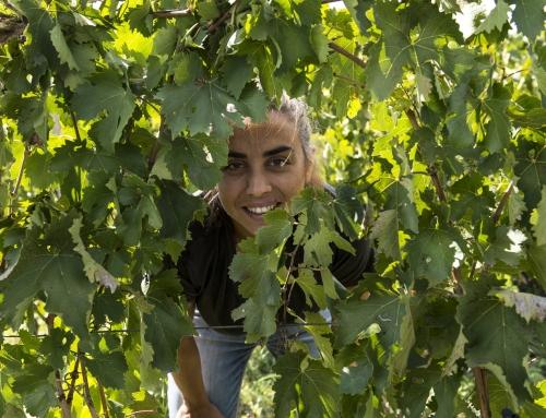 Donne del Vino: Arianna Occhipinti e il suo Amore per il Vino