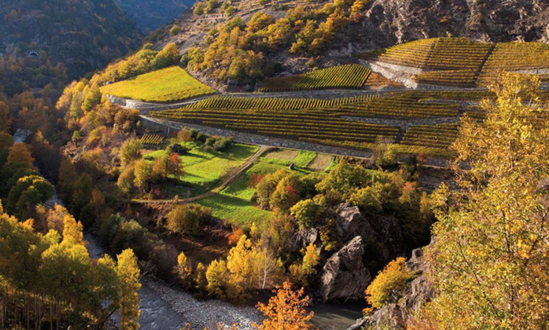 vini della Val D'Aosta viticoltura eroica
