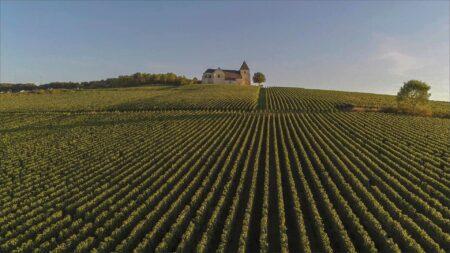 vitigni resistenti champagne sostenibilità