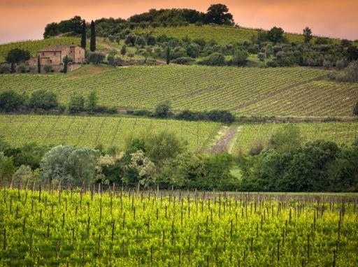 vini 2020 brunello di montalcino