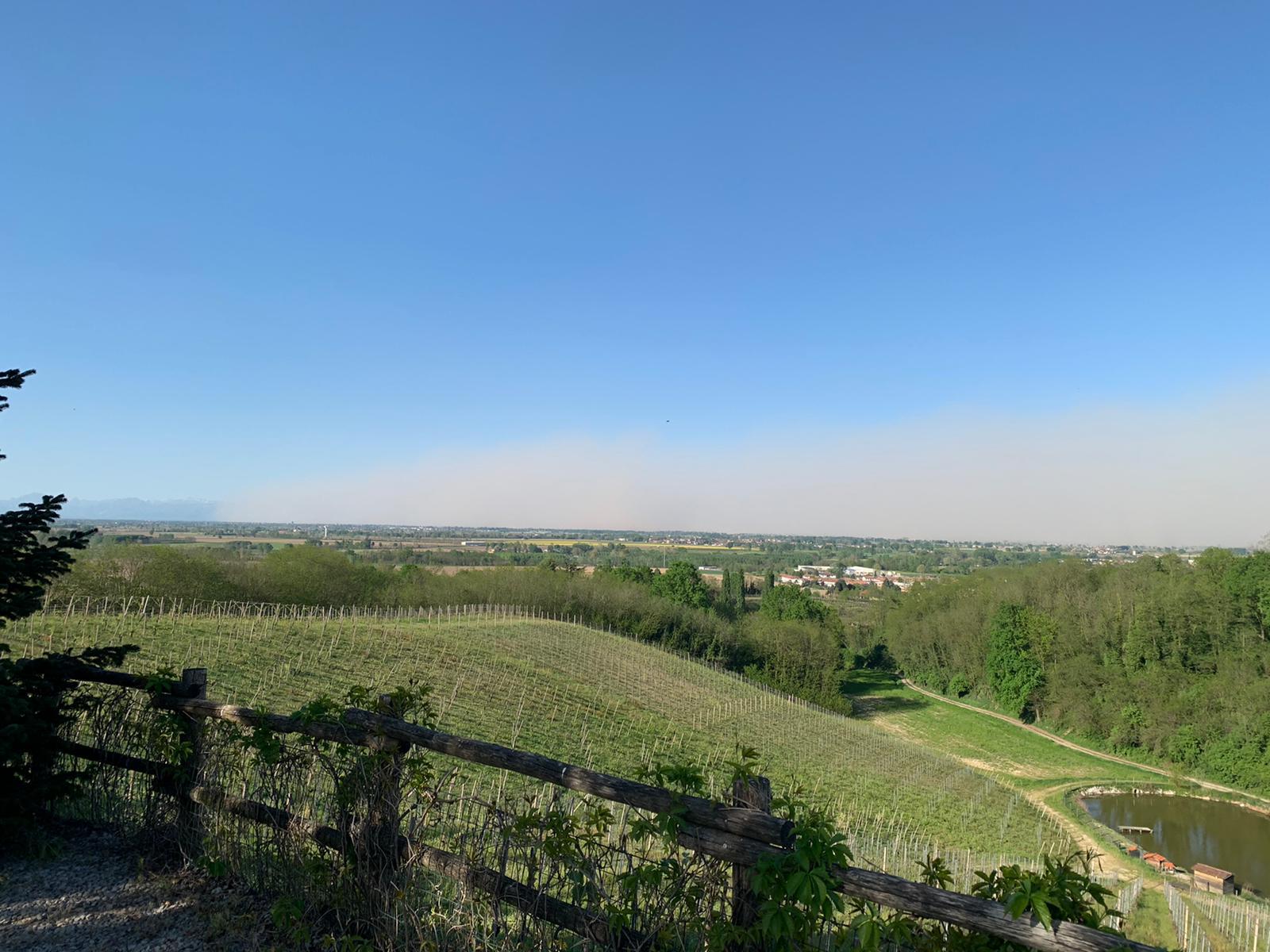 Vigna Nettare dei Santi produzione vino di Milano