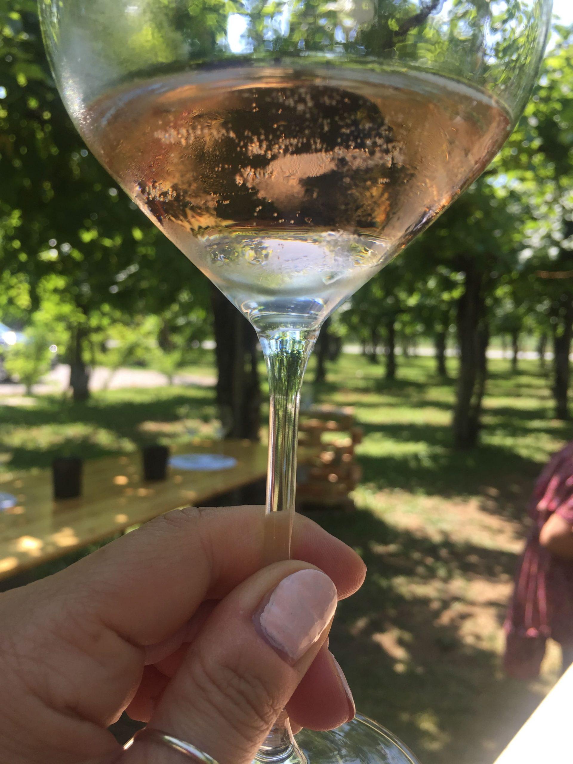 Prosecco Rosé vini veneti