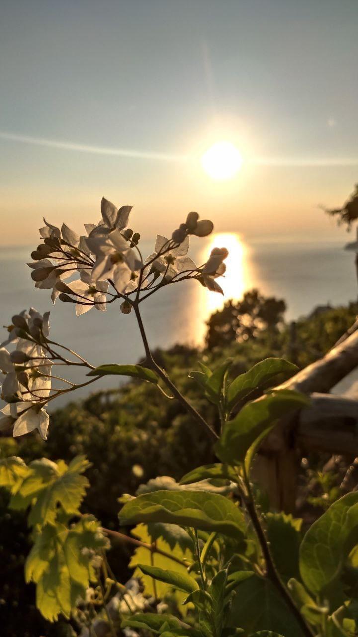 Cena in vigna Cinque Terre Capellini Agrivino